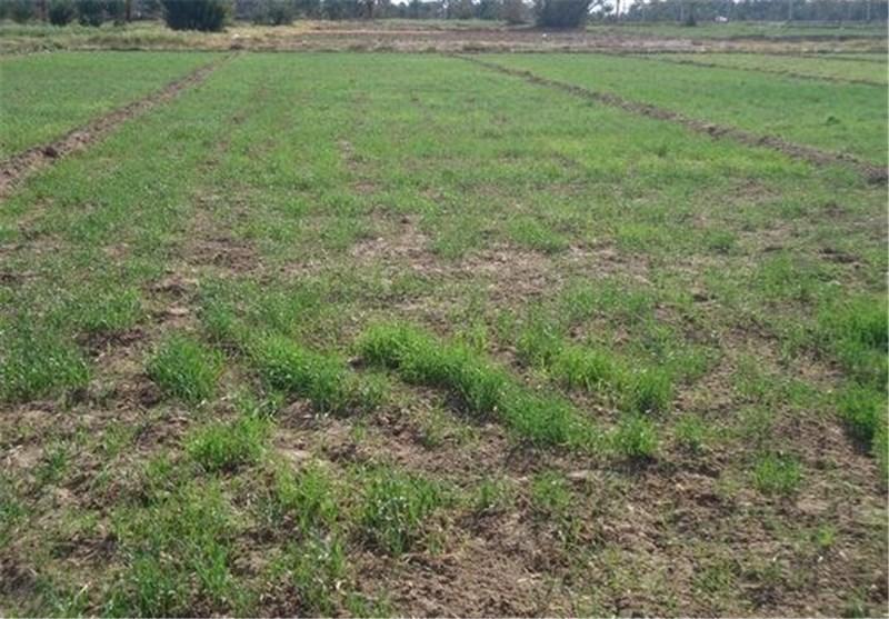 تغییر کاربری اراضی کشاورزی چالش اصلی شهرستان گنبدکاووس است