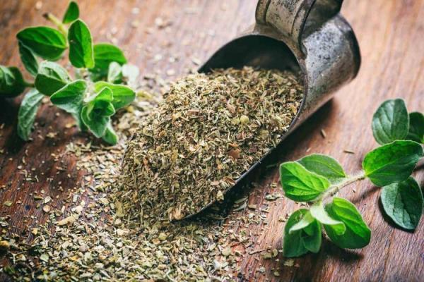 همه چیز در مورد گیاه دارویی آویشن