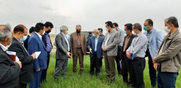 کاهش فراوری محصولات زراعی در نتیجه خشکسالی در کردستان