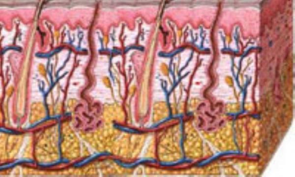 هفت اکسیر جوانی پوست